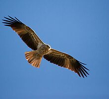 a flying whistling kite by houenying