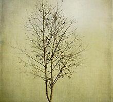 Morning Fog by Linda Lees