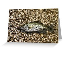 Crappie 1 Greeting Card