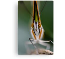 More butter, less fly Canvas Print