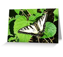 Tiger Swallowtail - Virginia State Insect Greeting Card