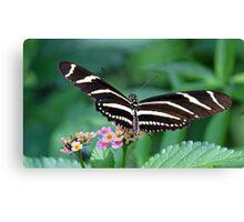 Zebra Longwing butterfly 2 Canvas Print
