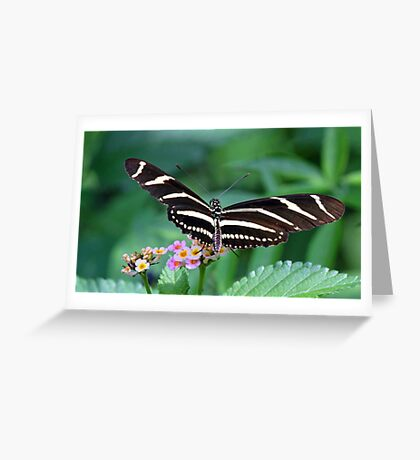 Zebra Longwing butterfly 2 Greeting Card