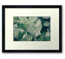 the sweetest of peas...3~ Framed Print