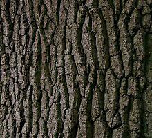 Oak by Kathryn Page