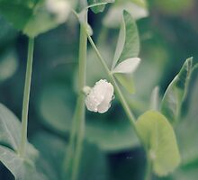 the sweetest of peas...8~ by Brandi Burdick