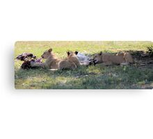 Meal Time Canvas Print