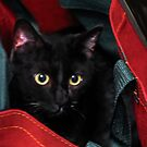 Cat In The Bag by Heather Friedman