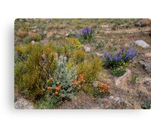 Wildflowers in the Desert,Cold Springs,Reno,Nevada USA Canvas Print