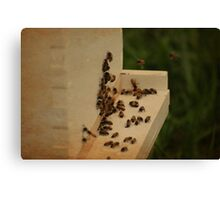 Beekeeping Canvas Print