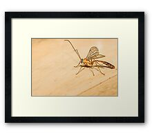 Giant Mosquito/Bug Framed Print