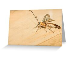 Giant Mosquito/Bug Greeting Card