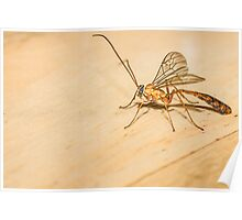 Giant Mosquito/Bug Poster