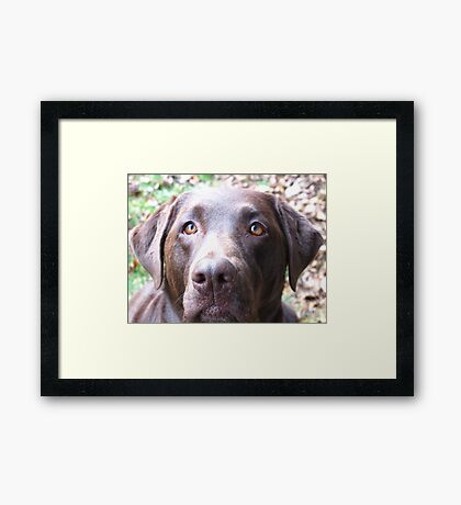 When Chocolate turns to Fudge Framed Print
