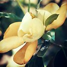Magnolia by FaireUnVoeu