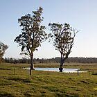Farmlands, Buchanan NSW Australia by SNPenfold