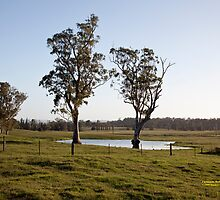 Farmlands, Buchanan NSW Australia by SNPenfold