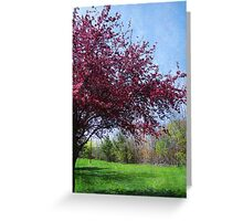 Blossoming Cherry Tree Greeting Card