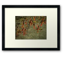 The Maple Tree Framed Print