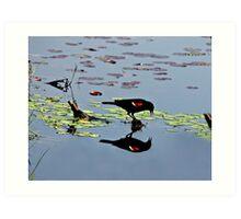 Red-Winged Black Bird Reflection Art Print