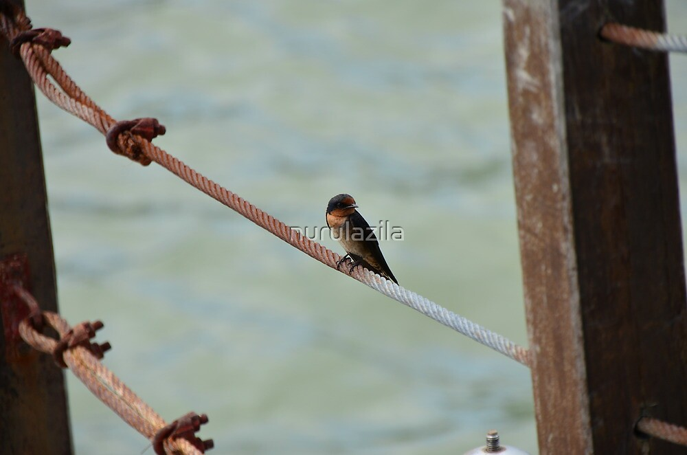 Little Bird on Metal Wire by nurulazila