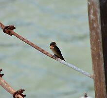 Little Bird on Metal Wire by nurulazila