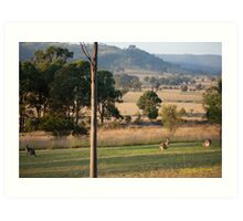 Kangaroos with their Joey -Vacy, NSW Australia Art Print