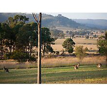 Kangaroos with their Joey -Vacy, NSW Australia Photographic Print