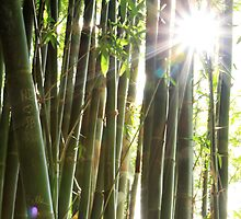 bamboo bright by SharronS
