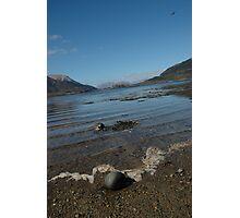 Seagull, Glencoe Photographic Print