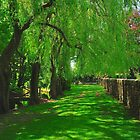 Beautiful Green Path Winterborn Zelston by delros