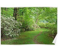Mountain Laurel - Harriman Park Poster