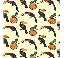 Two toucan and persimmon ornament Photographic Print