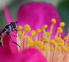 Hoverfly (2) by LeJour
