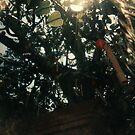 Leaf of Heart - Lomo  by chylng