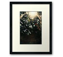 Leaf of Heart - Lomo  Framed Print