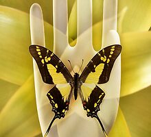 Butterfly_Thyiades_thyastes by Paul Eekhoff