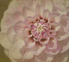 Dahlia on Parchment by Kerry McQuaid