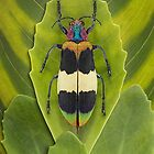 Beetle_Chrysochroa_corbetti by Paul Eekhoff