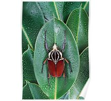 Beetle_Goliathus_goliatus Poster