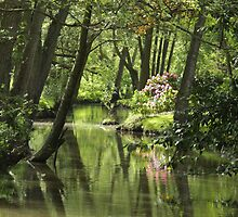 Tranquil river by carolhynes