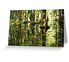 Cypress Canopy Water Reflection Greeting Card