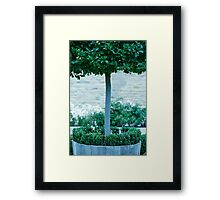 Topiary Detail Framed Print