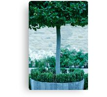 Topiary Detail Canvas Print