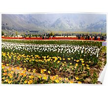 Oil Painting - Rows of tulips along with visitors Poster