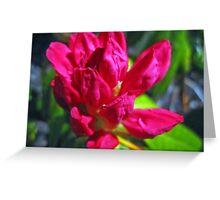 The Scarlet bloom Greeting Card