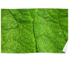 A leaf from below. Poster