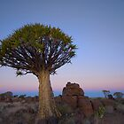 Quiver Tree Twilight - Namibia Africa by Beth  Wode