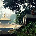 Pashupatinath Monkey by Jamie Mitchell