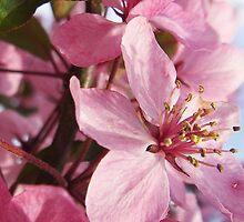 Summer Blossom by EmmaRoseGreen